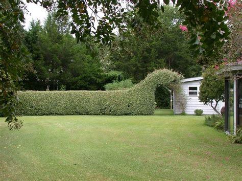 olive garden morehead city nc 22 best shrubs elaeagnus images on shrub