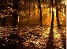 Beautiful Nature Forest Sunrise Wallpaper HD Wallpapers