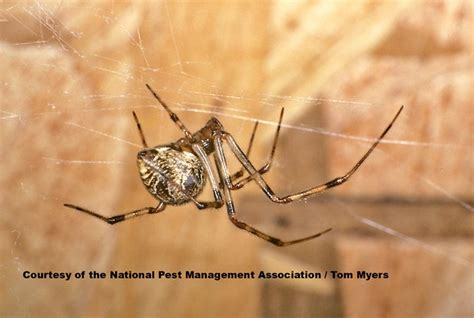 black and white modern furniture spiders 101 types of spiders spider identification