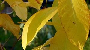 Pepiniere Des Avettes : automne l 39 arboretum de la s delle hortus focus i mag ~ Dode.kayakingforconservation.com Idées de Décoration