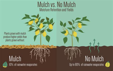 uses of mulch mulch much the benefits of using mulch in your garden urban organic gardener