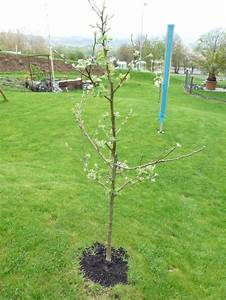 Wann Apfelbaum Pflanzen : buschrosen schneiden buschrosen schneiden wann wie und ~ Lizthompson.info Haus und Dekorationen