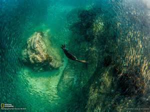 National Geographic Photo Bird Diving