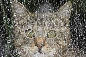 Katze Erbricht Oft : wenn die katze krank ist radio tirol ~ Frokenaadalensverden.com Haus und Dekorationen