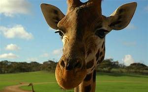 A Child with a Business Card? | The Next Family  Giraffe
