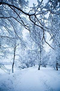 Winter trees on very cold winter day in Finland | Stock ...