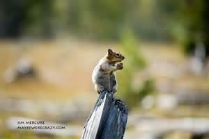 Wild Animals Yellowstone National Park