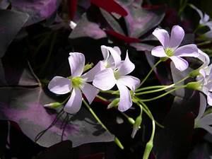 Pflegeleichte Zimmerpflanzen Mit Blüten : 13 pflegeleichte bl hende zimmerpflanzen ~ Sanjose-hotels-ca.com Haus und Dekorationen
