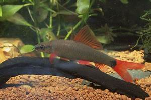 The 10 worst munity fish of all time — Practical