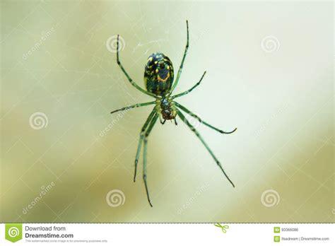 Garden Spider Green by Green Garden Spider Stock Photo Image Of Spider Blurred