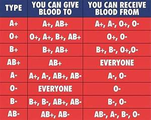 Blood Types   Coolguides