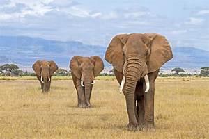 Gardinenstange Extra Lang : elefanten bild haus ideen ~ Whattoseeinmadrid.com Haus und Dekorationen