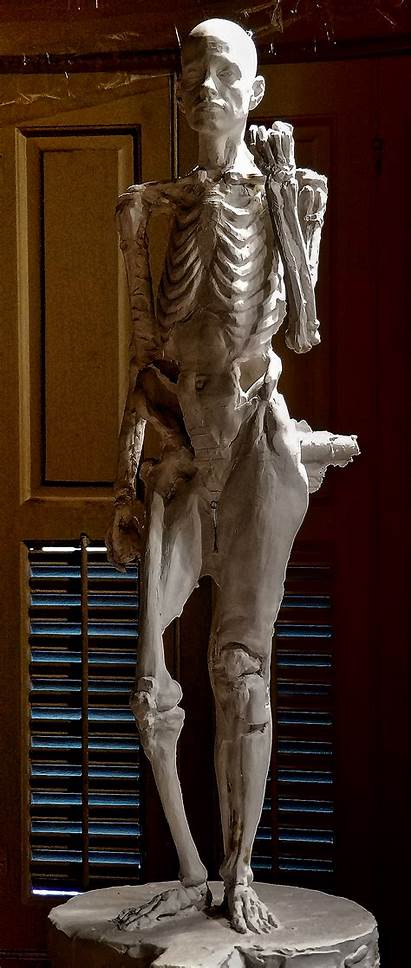 Sculpture Figure Anatomy Anatomical Plaster Class Parker