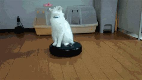 Roomba Archives Cute Cat S