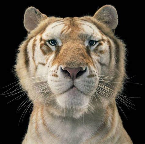 Image Result For Tim Flach Photography Wild Animals