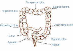 Colon And Spleen Pictures to Pin on Pinterest - PinsDaddy