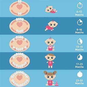 Pediatric Guide To Eruption