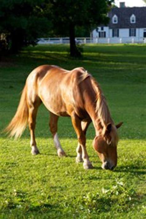 Vitamin D Pferd