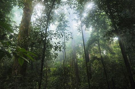 photo jungle forest trees green  image  pixabay