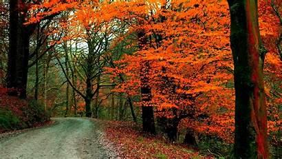 Autumn Road Foliage Path Tree Fall Landscape