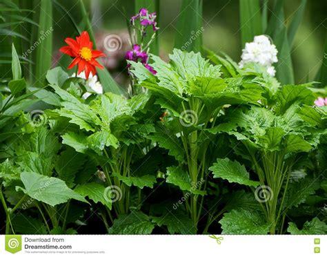 alle verschillende bloemen tuinbloemen van verschillende soorten stock afbeelding