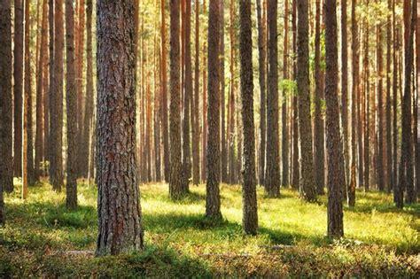 properties  cedar  pine wood hunker