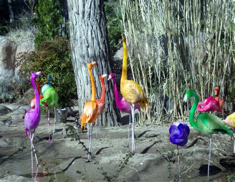rainbow flamingos  kno bad photoshop ah