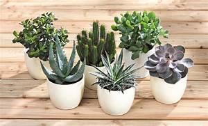 Pflanzen Die Wenig Licht Brauchen Heißen : zimmerpflanzen wenig licht die brauchen genial mit bla 1 4 ~ Lizthompson.info Haus und Dekorationen