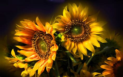 Beautiful Sunflower Nature Wallpaper Picture Background HD Wallpapers Download Free Images Wallpaper [1000image.com]