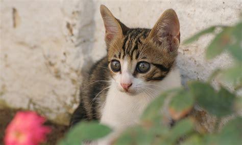 Gato means cat in spanish and portuguese. 10 consejos para encontrar a un gato perdido - VIX