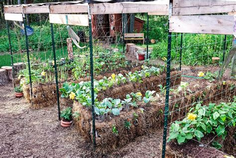 Where To Buy Straw Bales For Gardening by Straw Bale Gardening Edible Communities