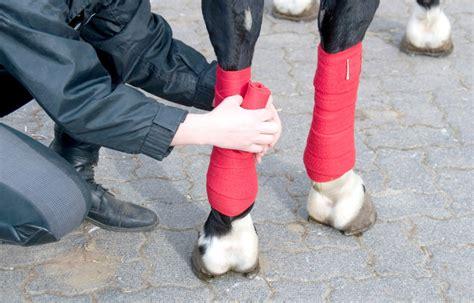 Gamaschen Für Pferd