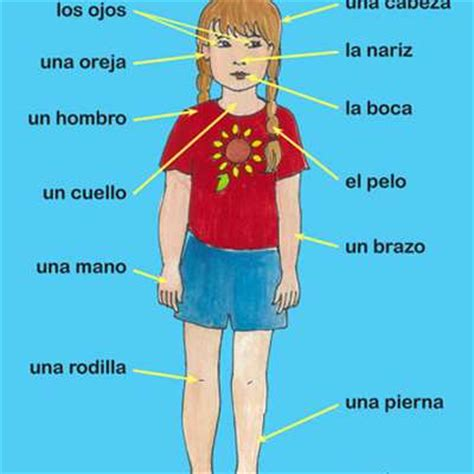 Body Parts In Spanish Memrise
