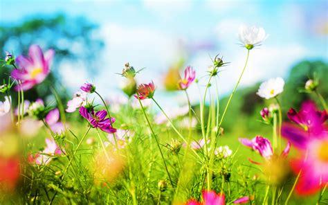Spring Background Wallpapersafari