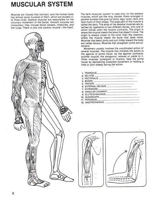 Printable Worksheets High School Muscular System Printable Best Free Printable Worksheets