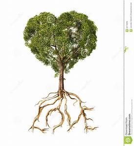 Mustard Seed Tree With Roots Clipart - Clipart Suggest
