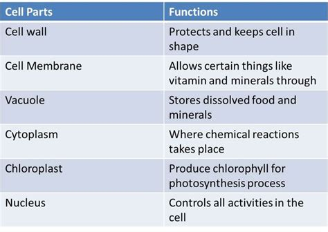 what is the purpose of rows in an excel sheet human cell parts and functions search science mathematics biological cell parts