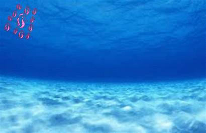 Under Sea Animation Compilations Multimedia
