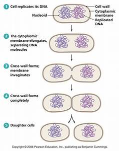 28 Best Images About Grade 11 Biology