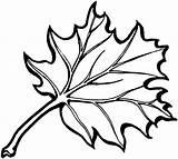 Oak Leaves Drawing Coloring sketch template