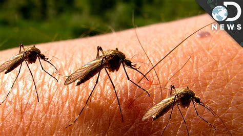 what is about mosquitoes why can t we get rid of mosquitoes youtube
