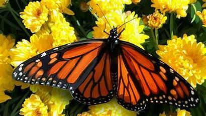 Butterflies Wallpapers Butterfly Cave