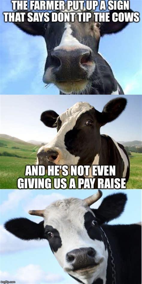 Cow Meme - bad pun cow imgflip
