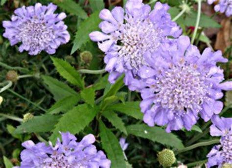 Saudade flor - Ouvir e Poema | Flores - Cultura Mix