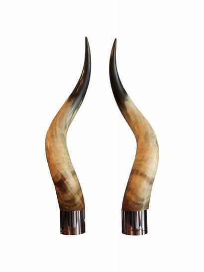 Horns Wallpapers