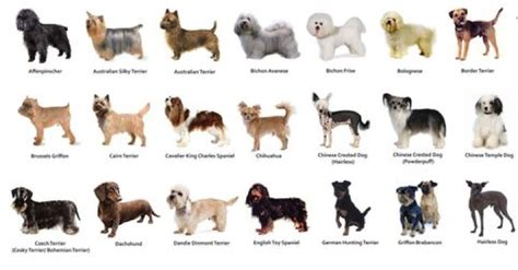 dog breed quizzes   stop  dog jumping   strangers