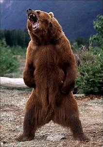 I may have read a grizzly attack story in BackPacker ...