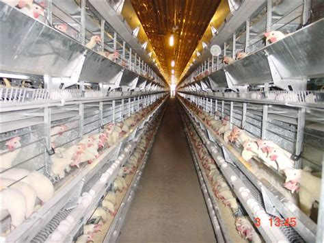chicken coop ventilation fans poultry ventilation shed ventilation poultry sheds