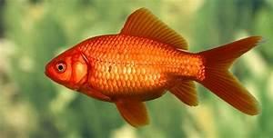 Fische Tipps Frs Erste Aquarium