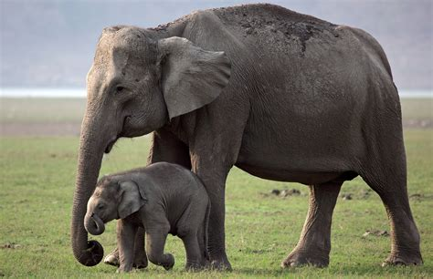 Cutest Child With Mother Elephant 4K Wallpaper HD Wallpapers